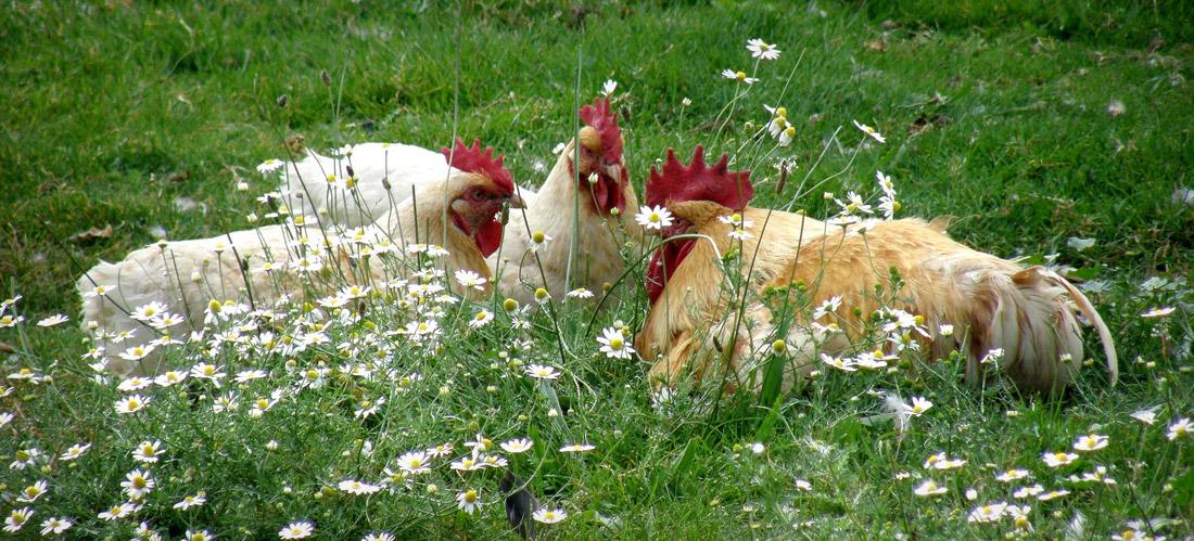 Bien-être animal & éthologie